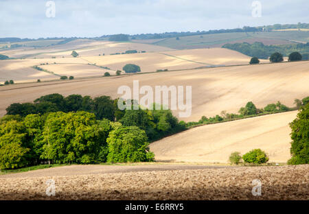 Rolling countryside arable fields in summer on chalk downland near Aldbourne, Wiltshire, England - Stock Photo
