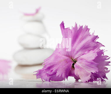 Background of a spa with pile of stones and blossoms on a white background. Selective focus. - Stock Photo