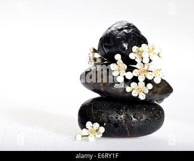 Background of a spa with black stones and white blossoms on a white background. - Stock Photo