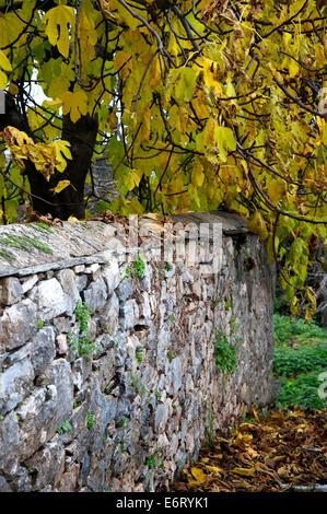 Feigenbaum mit Herbstlaub hinter Steinmauer (Halbinsel Pilion, Thessalien, Griechenland) - Stock Photo
