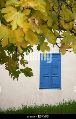 Herbstlaub eines Feigenbaums vor Hauswand mit blauen FensterlŠden (Halbinsel Pilion, Thessalien, Griechenland) - Stock Photo