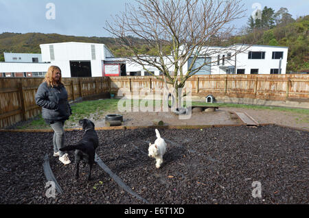 Dog daycare in Wellington New Zealand - Stock Photo