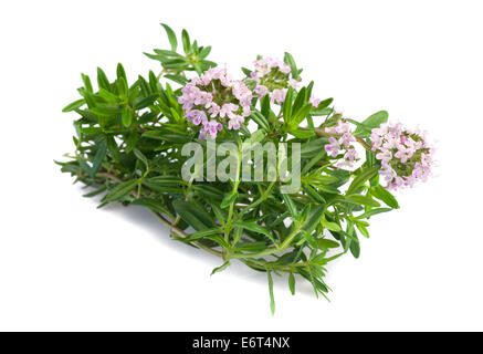 Savory bunch with flowers isolated on white background - Stock Photo