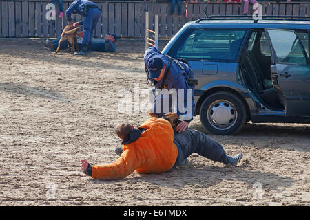 SANKT GALLEN, SWITZERLAND - OCTOBER 22: Police demonstrates dog training on the agricultural show 'Olma' on October - Stock Photo