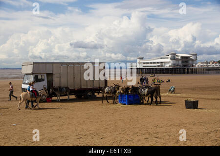 Donkey rides on Weston Super Mare beach with pier - Stock Photo