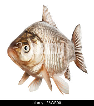 Crucian fish isolated on a white background. Clipping Path - Stock Photo