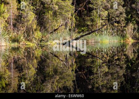Tannin stained waters, Oparara Basin, Karamea, Kahurangi National Park, South Island, New Zealand - Stock Photo