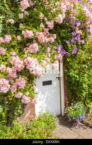 ... Stone cottage with white door and climbing roses - Stock Photo & Traditional white stone cottage with pink climbing rose over the ...