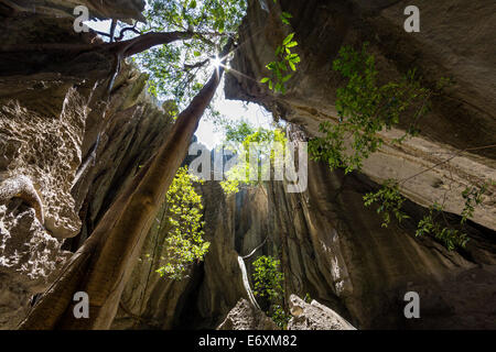 Rock formation with tree in the Tsingy-de-Bemaraha National Park, Mahajanga, Madagascar, Africa - Stock Photo