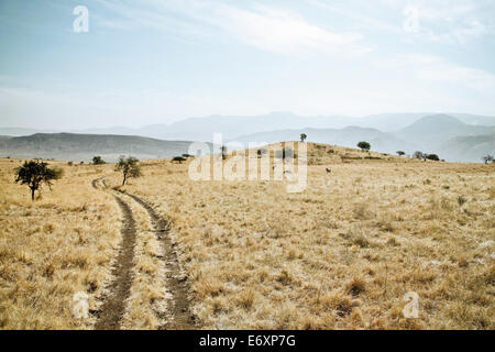 Zebras in Nechisar National Park, South Ethiopia, Africa - Stock Photo