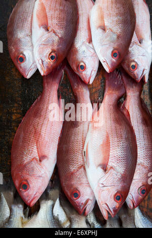 Red fish for sale at a market stand on Playa Las Hamacas beach, Acapulco, Guerrero, Mexico - Stock Photo
