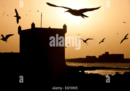 Seagulls flying over the port and the ancient Portuguese Citadel, Essaouira, Morocco - Stock Photo