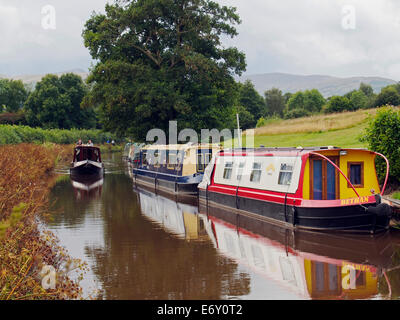 The Monmouthshire & Brecon Canal (Mon & Brec) neart pencelli with brightly coloured narrow boats. - Stock Photo