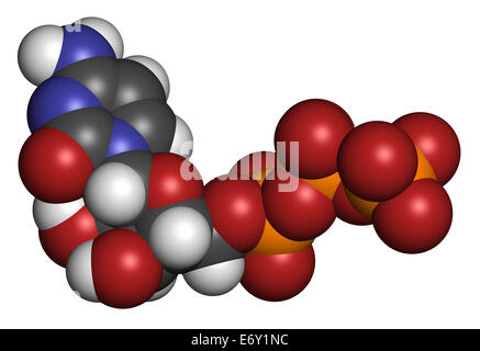Cytidine triphosphate (CTP) RNA building block molecule. Also functions as cofactor to some enzymes. Atoms are represented - Stock Photo