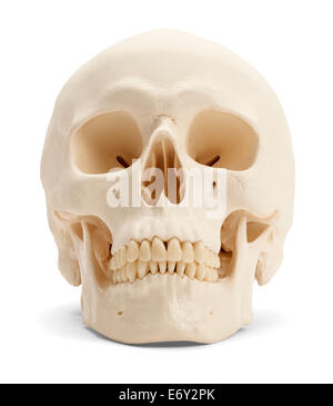 Front view of the human skull isolated on white background. - Stock Photo