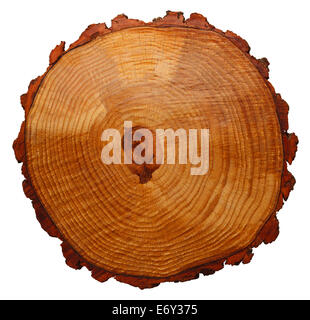 Wood Grain Tree Cross Section Isolated On White Background. - Stock Photo