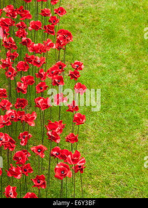 detail of the ceramic poppies exhibit  at the tower of london during heavy rain. The installation by ceramic artist - Stock Photo