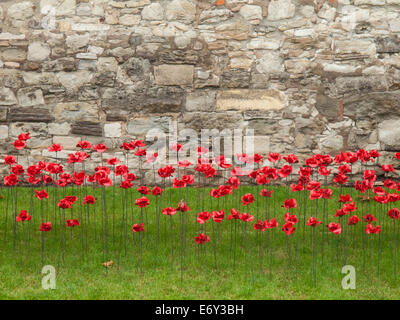 detail of the ceramic poppies exhibit  at the tower of london during heavy rain with the tower wall behind.  The - Stock Photo