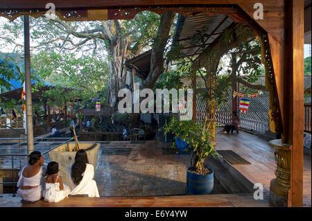 Praying buddhist women at Gangaramaya Temple, Colombo, Sri Lanka, South Asia - Stock Photo