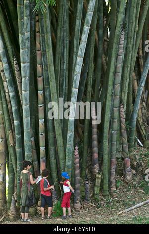 European family, woman with two children in front of giant bamboo, Peradeniya Botanical Garden, Kandy, Sri Lanka, - Stock Photo