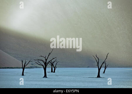 Dead camel thorn trees in Dead Vlei, Namib Desert, Namibia, Africa - Stock Photo