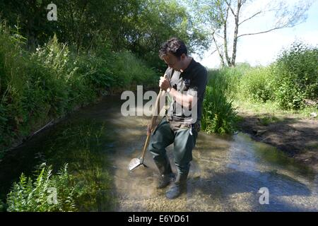Gloucestershire Wildllife Trust worker invertibrate sampling research in the river windrush near bourton on the - Stock Photo
