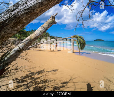 Cluny beach, Sainte-Rose, Guadeloupe, French West Indies - Stock Photo