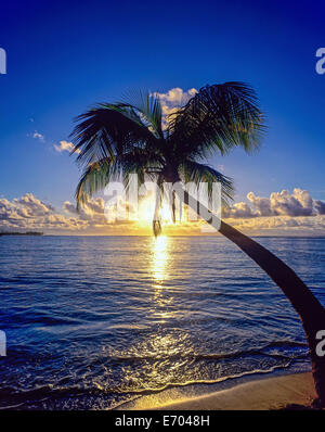 Sunrise over Caribbean sea and palm tree, Guadeloupe, French West Indies - Stock Photo