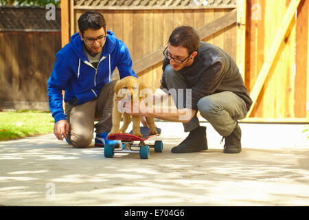 Two young men helping labrador puppy on skateboard - Stock Photo