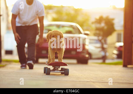 Labrador puppy on skateboard, owner following behind - Stock Photo