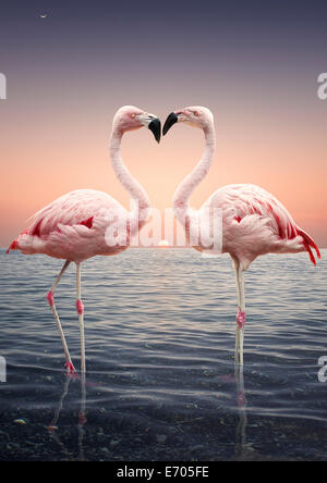 Portrait of two pink flamingoes standing face to face in sea at sunset - Stock Photo