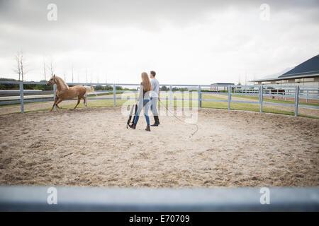 Two stablehands training palomino horse in paddock ring - Stock Photo