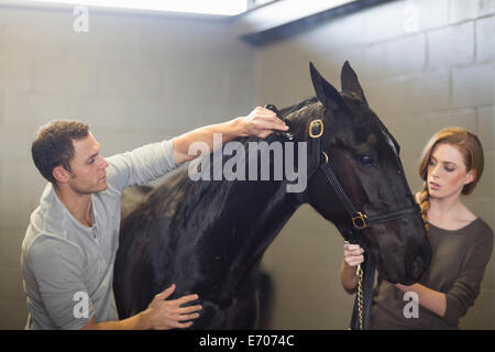 Stablehands grooming black horse in stables - Stock Photo