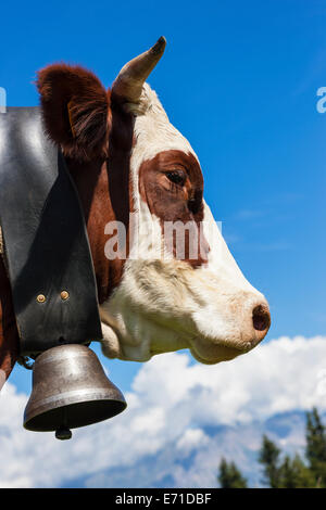 Brown cow in alpine mountain, France - Stock Photo