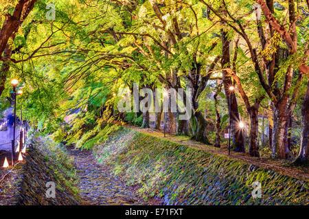 Maple Leaf tunnel in Kawaguchi, Japan. - Stock Photo
