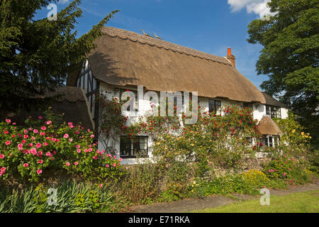 Picturesque English cottage with thatched roof, white walls covered with red and yellow climbing roses, blue sky, - Stock Photo