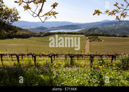 Lake Hennessey viewed from Continuum Estate, Napa Valley, California, USA - Stock Photo