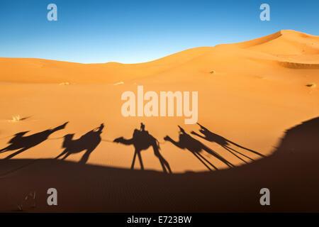 Dromedary riding at Erg Chebbi desert, Merzouga, Morocco, Africa - Stock Photo