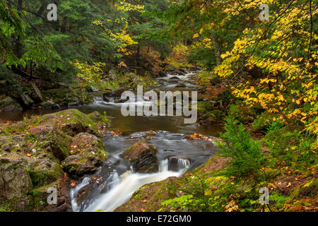 Autumn leaves along the Little Carp River in Porcupine Mountains State park, Michigan, USA. - Stock Photo