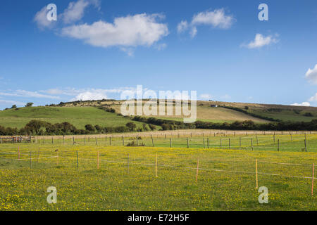 The rolling lush green equestrian countryside of Preston near Weymouth, Dorset UK - Stock Photo
