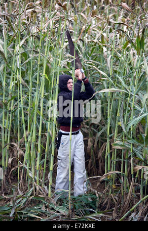 USA - Tennessee - Muddy Pond - Teenager harvesting sorghum in Muddy Pond, a mennonite farming community in the Cumberlands - Stock Photo