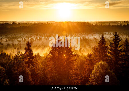 Sun rising on an early morning at the Torronsuo Swamp in Finland. The sun shining bright at the golden hour. - Stock Photo