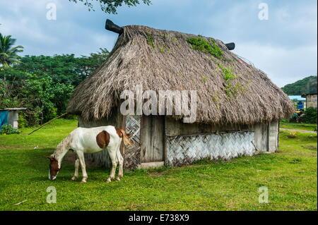 Traditional house on the Coral Coast, Viti Levu, Fiji, South Pacific, Pacific - Stock Photo