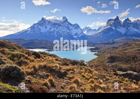 Grasses, Lago Pehoe and the Cordillera del Paine, Torres del Paine National Park, Patagonia, Chile, South America - Stock Photo