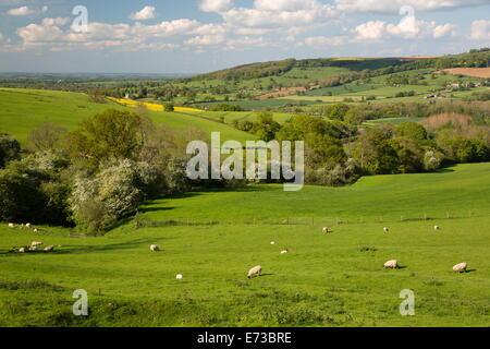 Cotswold landscape, near Winchcombe, Cotswolds, Gloucestershire, England, United Kingdom, Europe - Stock Photo