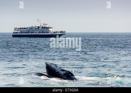Stellwagen Bank Whale Watching - Stock Photo