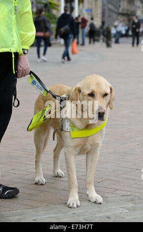 """how are dogs trained to help blind people? essay There's a specialist from your university waiting to help you with that essay  dogs (""""dogs and people:  and mixed breeds are trained to guide the blind and."""