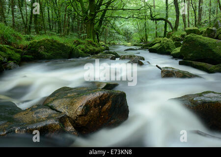 The river Fowey cascading through woodland at Golitha Falls, Cornwall. - Stock Photo