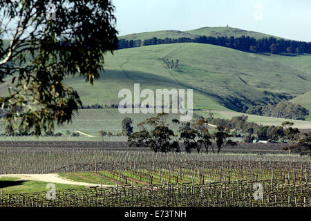 Rows of vineyards beneath rolling hills in the Barossa Valley in Australia - Stock Photo