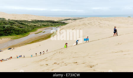 Sand Surfers Trek up one of the Te Paki giant sand dunes - Stock Photo